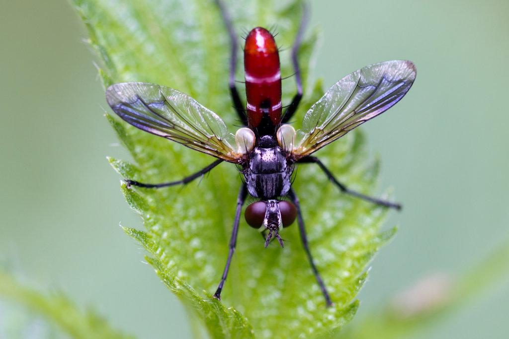 Insekten/Spinnen
